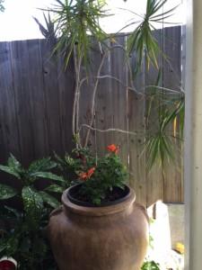 Oct 24 2015 plant