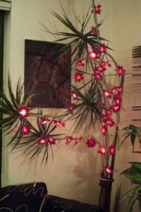XmasLights-on-plant_hanson_2